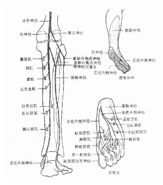 淋巴结结构图