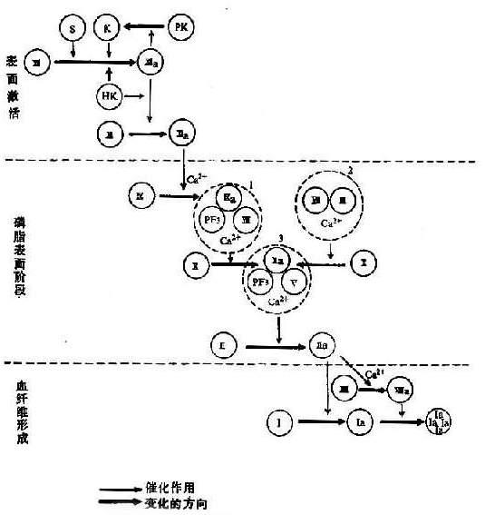 图3-5血液凝固过程示意图-医护教育