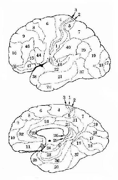 大脑三层结构 矢量