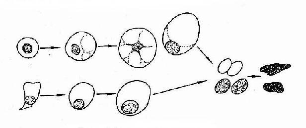细菌细胞结构手绘图
